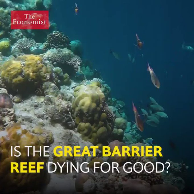 @TheEconomist: The Great Barrier Reef has the ability to resurrect itself. But coral bleaching might destroy it for good https://t.co/HRXW1YUV1Y