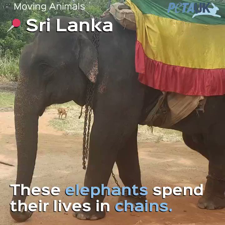 RT @PETAUK: Your holiday is their nightmare. ???????? Never support elephant rides. https://t.co/9luoOUrI4p