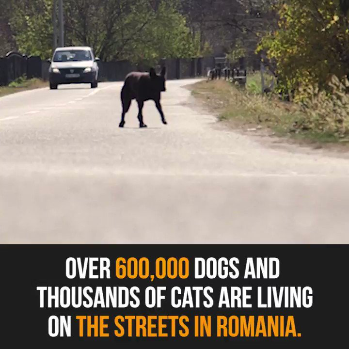 RT @PETAUK: In Romania, over 600,000 dogs and thousands of cats live on the streets. ???????????? https://t.co/TPmWvyNSqd