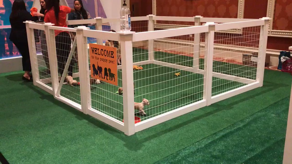 avalara: PUPPIES. Need we say more?nnThanks @Adobe and Wagging Tails Rescue for the Puppy Play! #MagentoImagine https://t.co/WnmXBaNLZ3