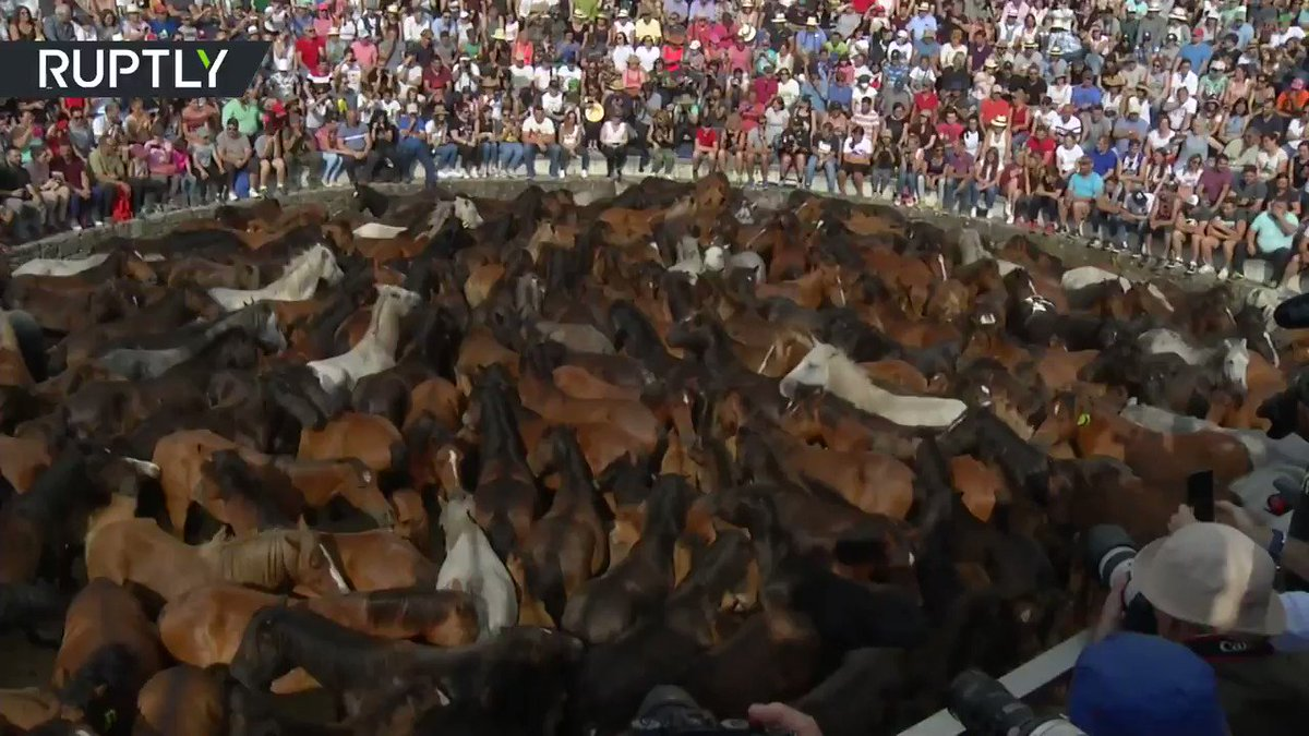 RT @RT_com: Spaniards wrestle wild horses at annual 'Rapa das Bestas'  festival https://t.co/HlankImBo4