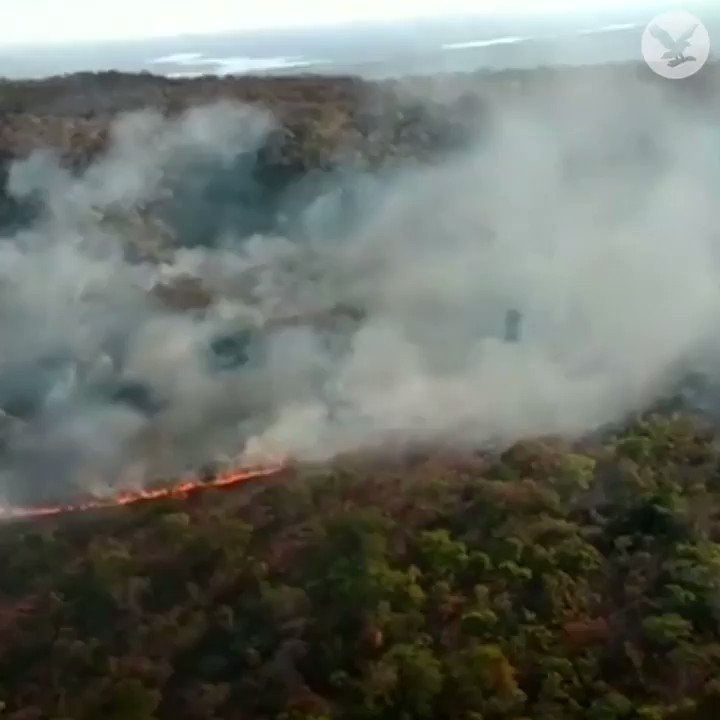 Brazil's Amazon rainforest is on fire