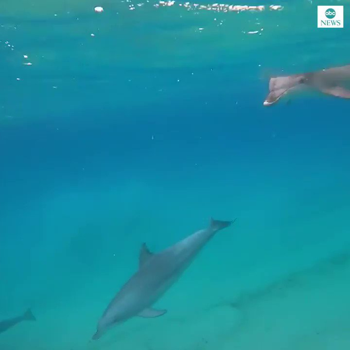 FIN-TASTIC FORTUNE: Surfer has incredible close encounter with pod of dolphins in Byron Bay, Australia.
