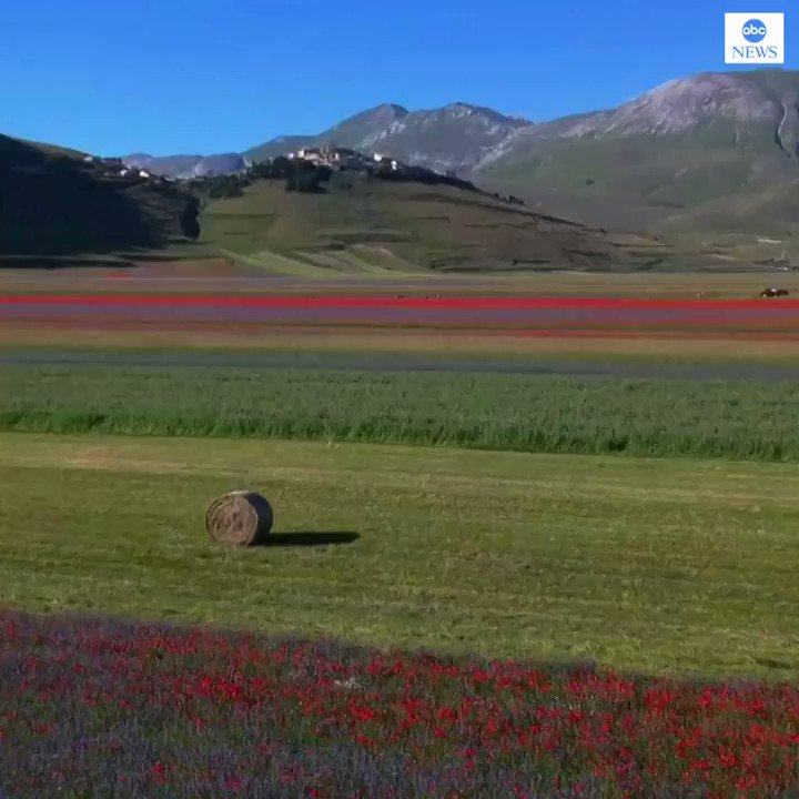 FLOWER POWER: Resplendent in color, the Umbrian plain of Castelluccio bursts into life with poppies, daisies and cornflowers in bloom.