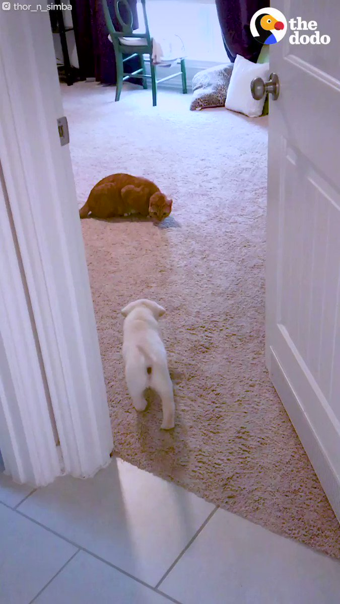 The moment this cat gives kisses to his dog brother 😭💕
