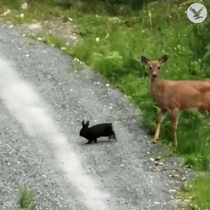 J'ai toujours su que Bambi et Panpan ce n'était pas une légende