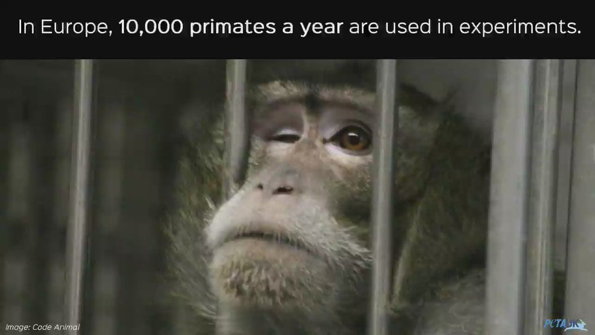 RT @PETAUK: Primates are suffering in laboratories. SIGN now to call for an EU ban: https://t.co/np972T98PC https://t.co/BA9mGoQ0qJ
