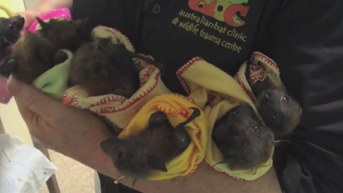 This video will forever alter your perception of #bats. View with extreme caution. #BatWeek #HelpTheBats https://t.co/FBJ4hDWYm0