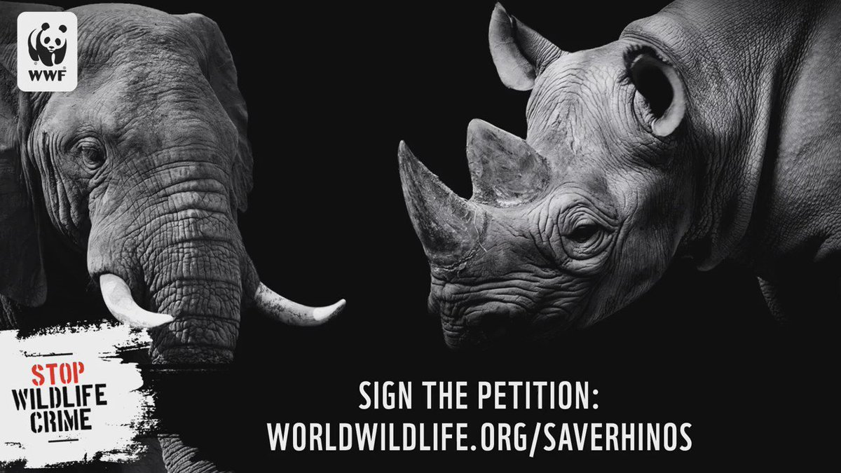 RT @World_Wildlife: Why Vietnam must act now to save rhinos. Sign the petition: https://t.co/E4kIDtKbPy https://t.co/iWIeB2kpiw