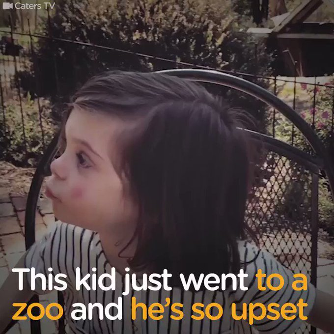 This 3-year-old just went to the zoo, and he immediately hated what he saw.