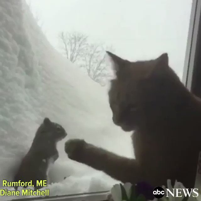 Milo, an 8-year-old cat in Maine, has been in pursuit of a certain squirrel all winter long.