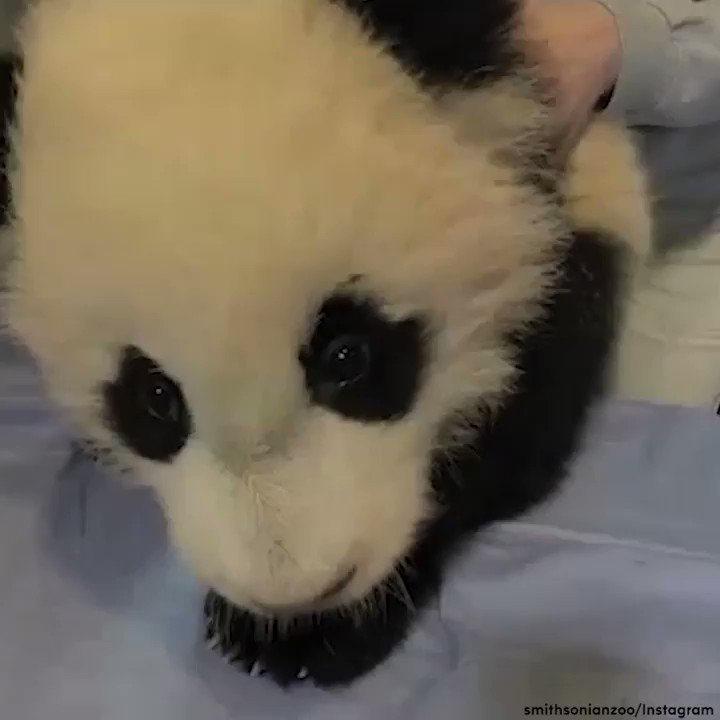 Bao Bao is moving to China! Say #ByeByeBaoBao with a look back at her cutest moments