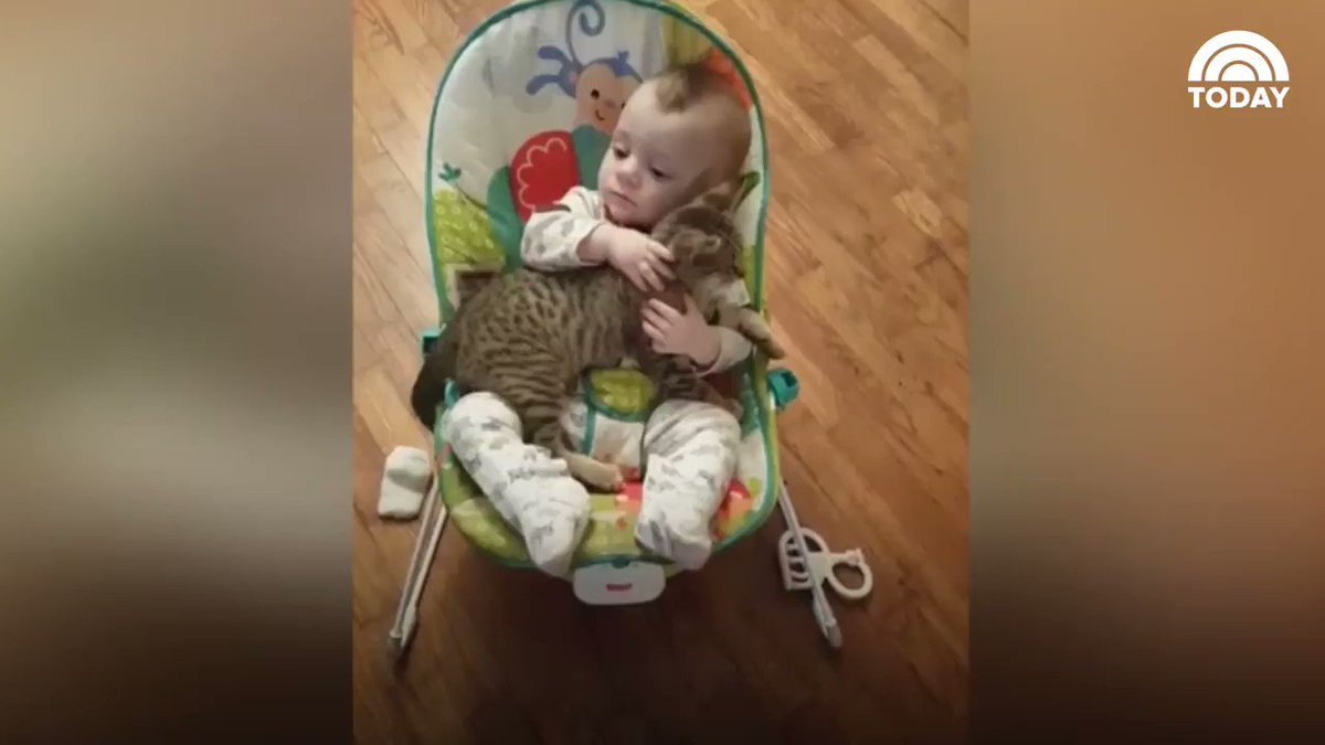 WATCH Snuggling little boy and kitten is the sweetest cuddlefest ever