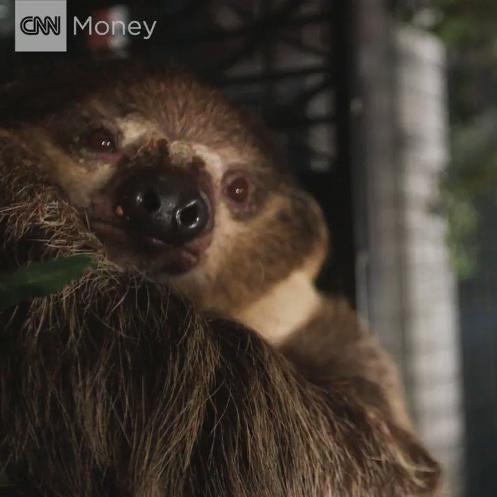 Why stay at a hotel in Portland, Oregon, when you can have a sloth sleepover instead?