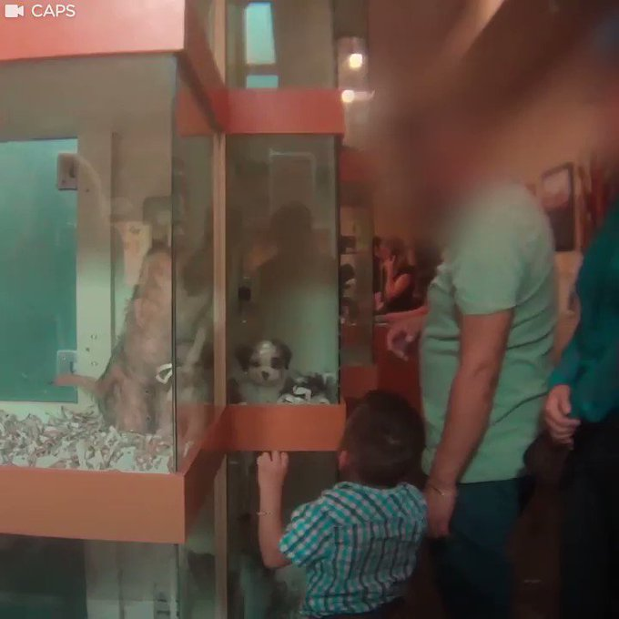 If everyone saw this, no one would ever buy a dog at a pet store. https://t.co/jZgqzA9hzA