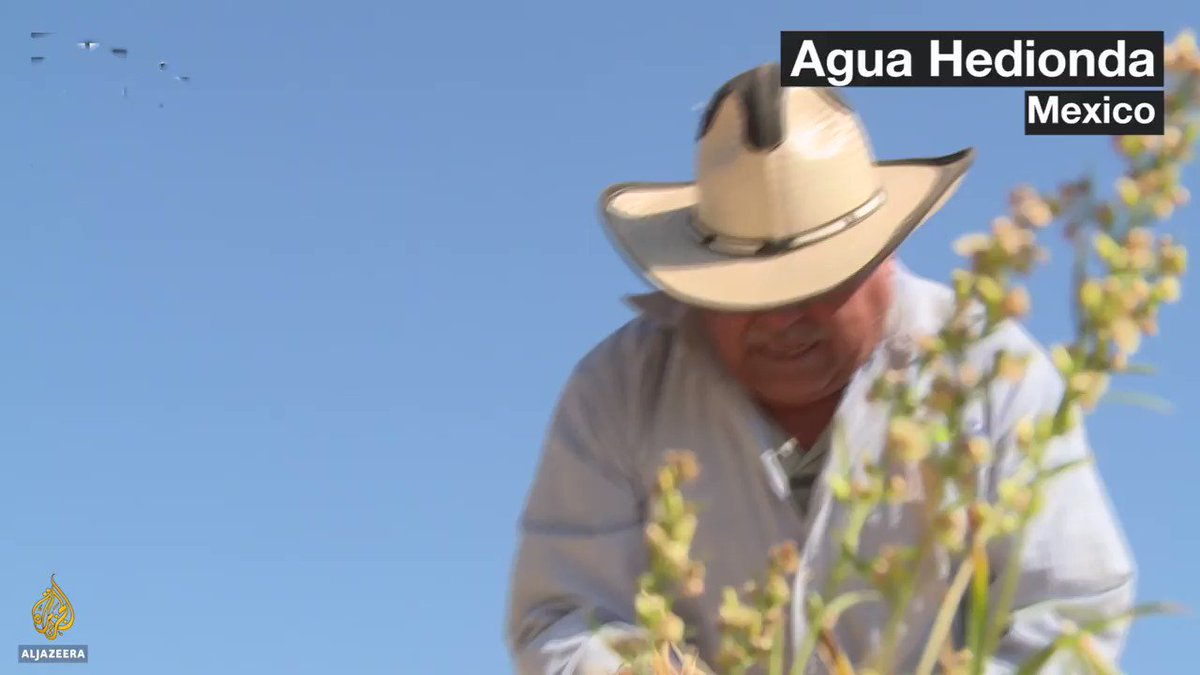 Solid rain is helping some Mexican farmers fight drought, but what is it?