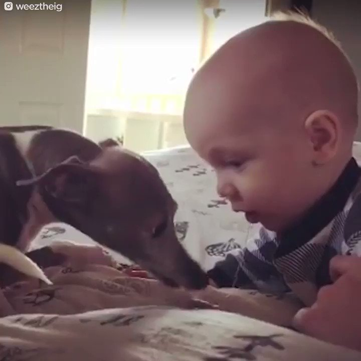 RT @dodo: This dog was scared of everything — until she got a baby brother ❤️ https://t.co/Z331mcK46C