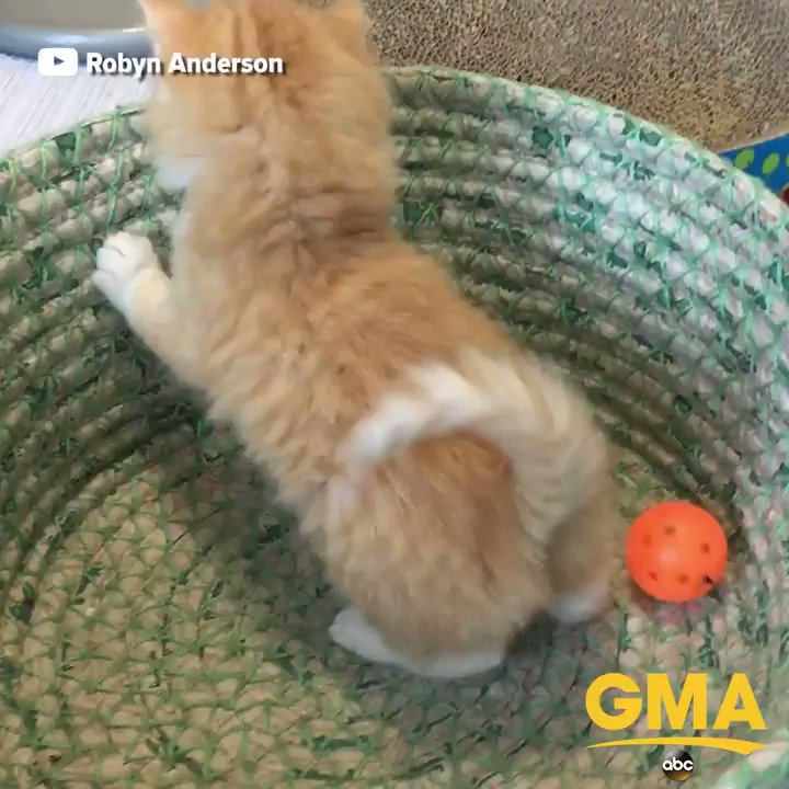 These adorable kittens will surely brighten your day. https://t.co/jGJ0mfxdGD https://t.co/zWArpjaHdD