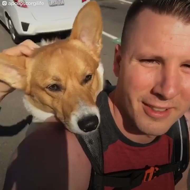 Image of: Training This Corgi Has The Best Relationship With His Dad He Even Works As His Emotional Support Animal Scoopnestcom Abc News This Corgi Has The Best Relationship With His Dad He Even Works As