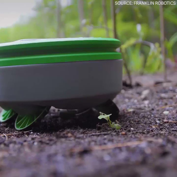 Meet Tertill, a weed-killing robot for your garden https://t.co/ThPGkc8Wzn