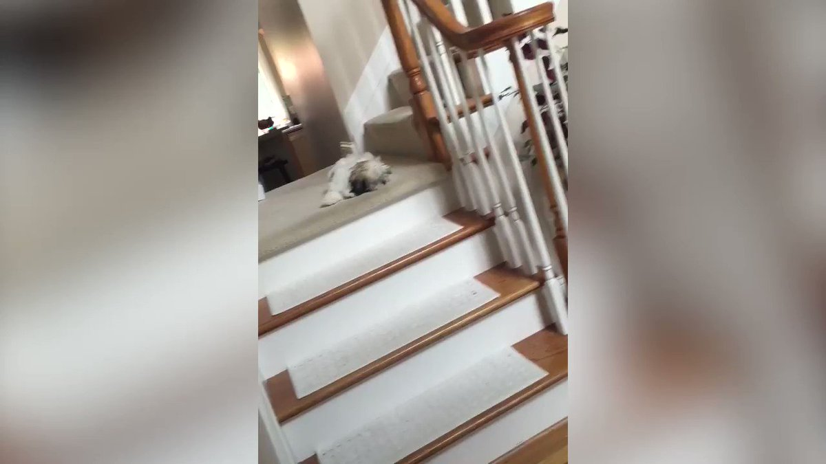 RT @AFVofficial: She won't walk down stairs, but she'll get downstairs ???? https://t.co/TgA3tRrYHa