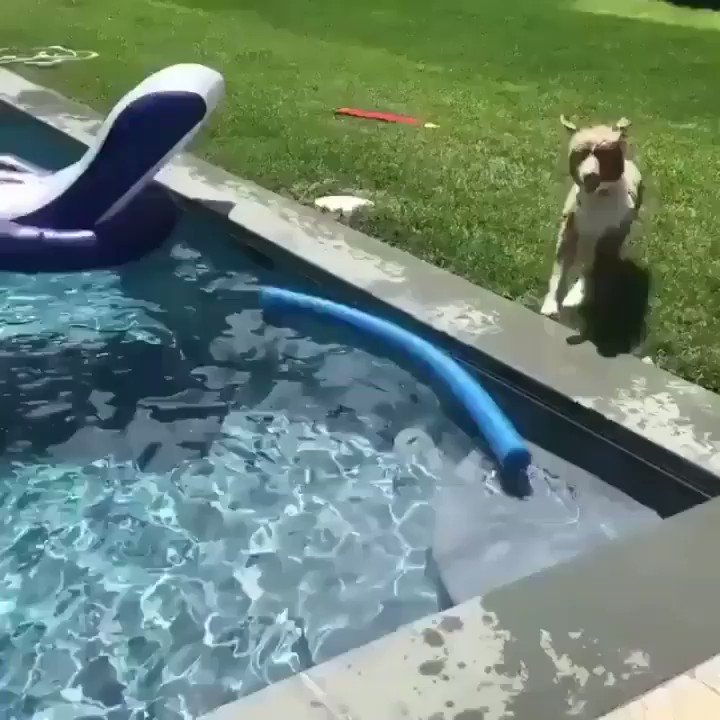 RT @Mogaza: This dog thought its owner was drowning https://t.co/LT3nGb5ve0