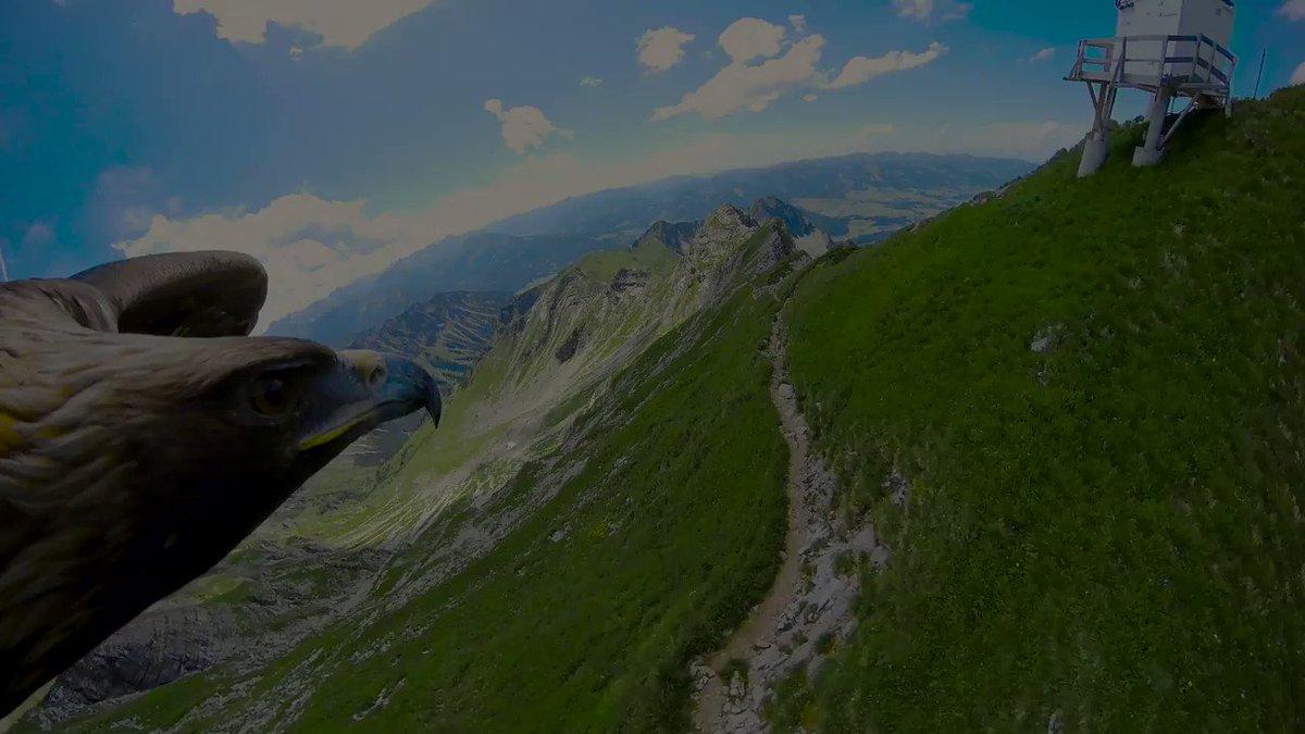 RT @redbullESP: ¡A-LU-CI-NAN-TE!  Los Alpes... ¡a vista de águila! 😍 #TeDaAlas https://t.co/OmNMbhqDrF
