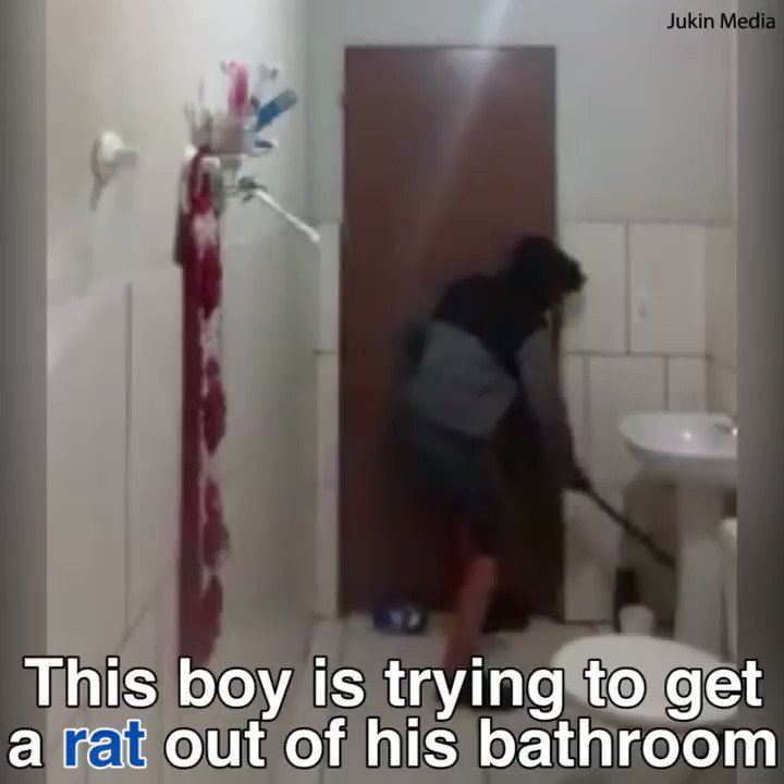 This boy and his cat are being terrorised by a rat! ��  https://t.co/kwuOxKHbeN https://t.co/kVTSe0W65r