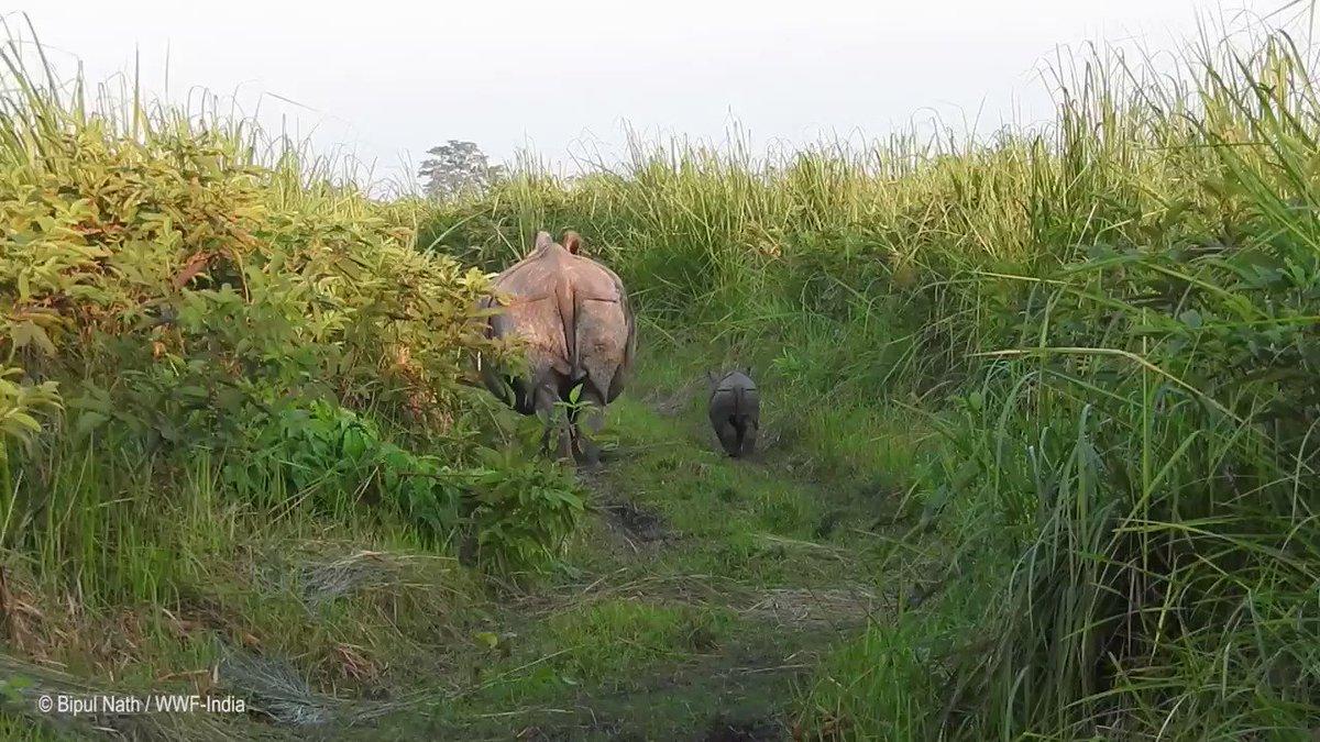 ???? In honor of #WorldRhinoDay, symbolically adopt a rhino from @world_wildlife: https://t.co/jZcXzTFzD8 https://t.co/DEzpz6iZaz