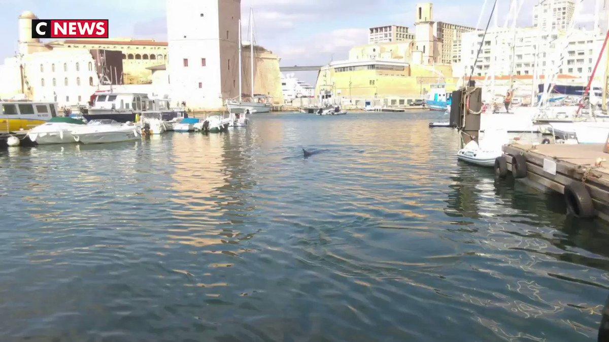 Plus fort que la sardine qui a bouch le port de marseille la baleine - Sardine port de marseille ...