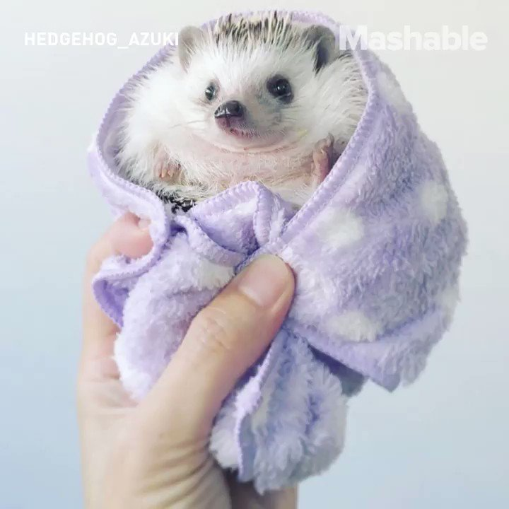 Because hedgehog camping is the best camping... https://t.co/K3R2IW3E8t