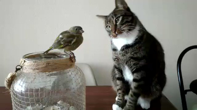 Well this is a first.  I can honestly say, I've never seen a cat trying to pet a bird. https://t.co/BduMhPhoDI