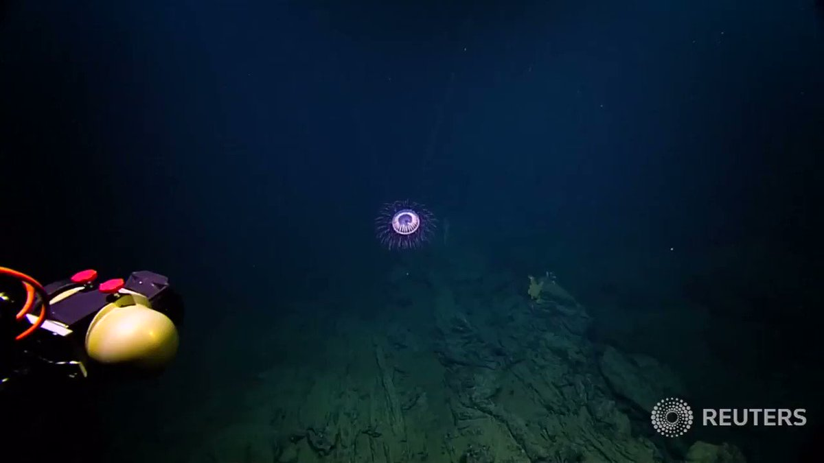 WATCH: A rare jellyfish resembling an exploding firework is seen off the coast of Mexico https://t.co/ZqdLzTJucY https://t.co/egGgU9z7f0