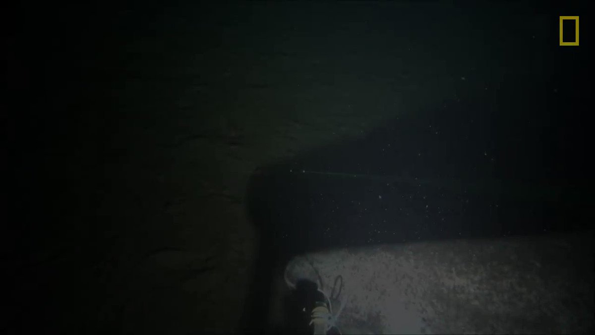 Greenland sharks are known to frequent the dark waters of the Arctic—but they're rarely caught on camera https://t.co/doDdtogmPG