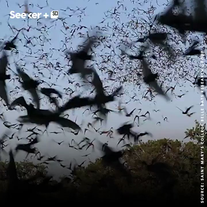 This advanced drone can fly within swarms of bats without harming a single one. https://t.co/gze9iBr71Z