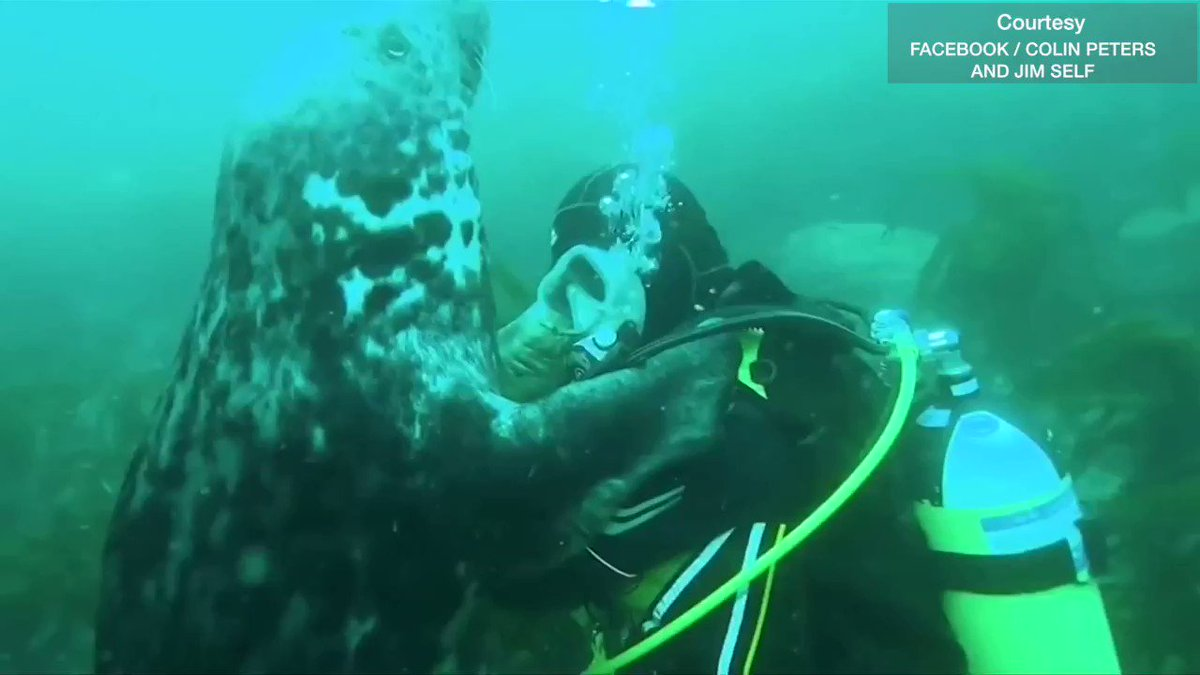 Sealed with a kiss: divers get a visit from an affectionate sea animal https://t.co/M7uYCT8YUQ