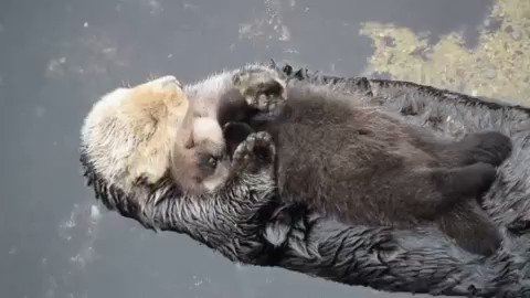 RT @oceana: RT if you love sea otters! ???? #WorldOtterDay https://t.co/idDmQW8Cdx
