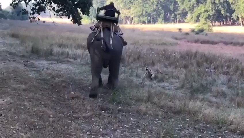 A Father's Day morning from my friend in India. Happy Father's Day to all the Dads out there. https://t.co/IbtD6716x4