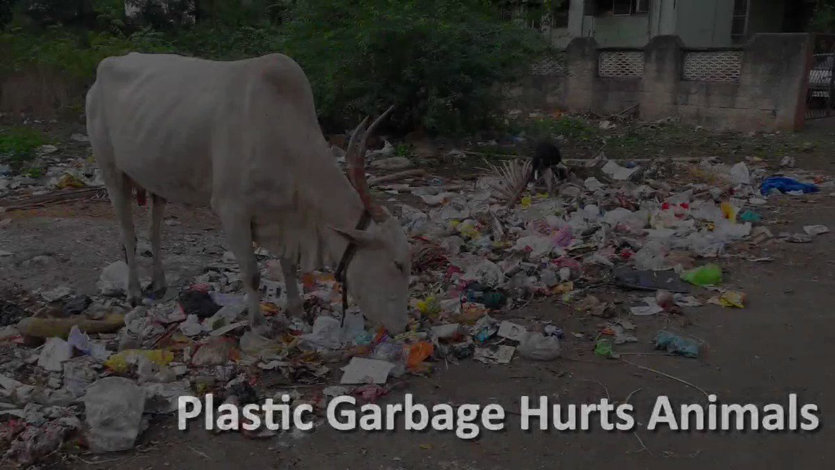 RT @peta: It's not just straws! So many cows and other animals are hurt by plastic ????  [via @PETAIndia] https://t.co/wHjuqbYDGq