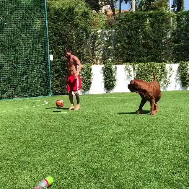 #Messi???????? treinando com seu cachorro Hulk que vai fazer com @SergioRamos no #ElClasico ???????????? #ViscaBarça ???????????? https://t.co/PT70MJi5cg