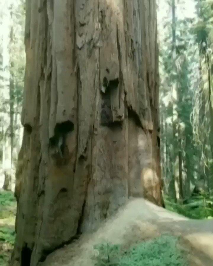 Tree Hugger 🌲 zp2fPrdZ6V