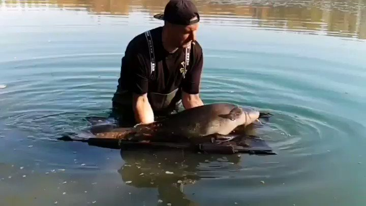 Bitch slapped by a Catfish 🤣 #AvidCarp #TeamBaitTech #carpfishing https://t.co/mdl40L5BEK