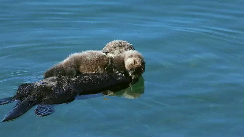 RT @oceana: RT if you love otters ???? https://t.co/yAQxjuO4Nm