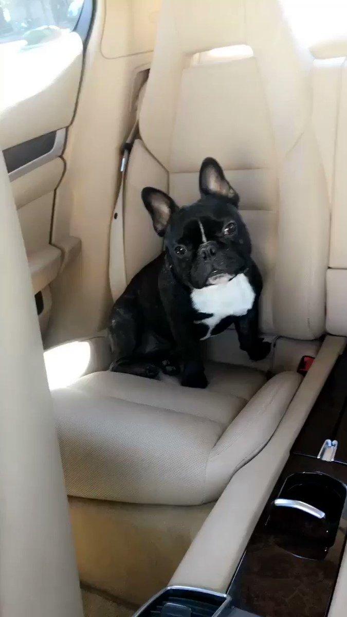 I'm his Uber driver 🤣🤣 HeiVPh00ls