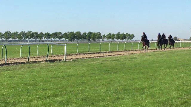 On the gallops  with @almracing string https://t.co/qpWakNhzbr