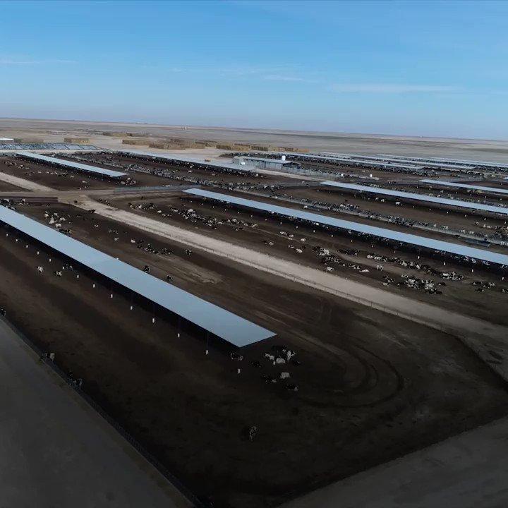 RT @MercyForAnimals: Here's how factory farming hurts rural communities. https://t.co/GVoqx5gfhn