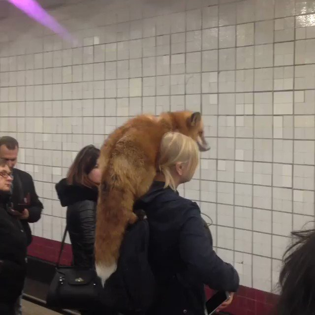 This is the only way to wear a fox 🦊