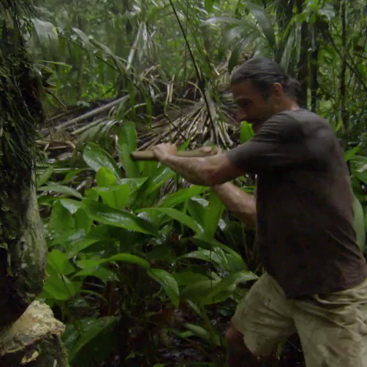 Hazen's been hunting for honey before, but how will his latest experience compare to his first attempt in this video? Don't miss his extreme honey hunt in the next episode of #PrimalSurvivor tomorrow 8PM on @NatGeoUK #newseries #adventure #survivalist #honey #bees @HazenAudel https://t.co/akB2IKB3XP