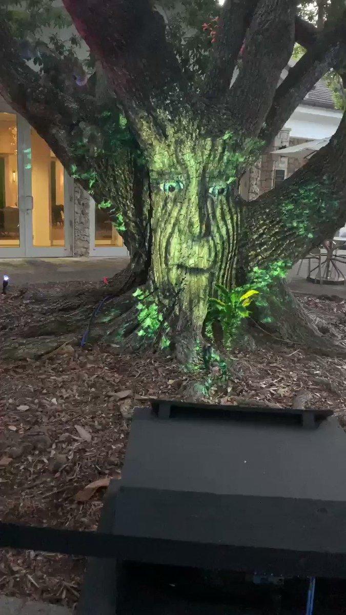 Talking tree @FairchildGarden https://t.co/pXudOf656F