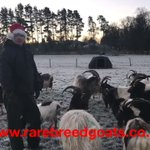 Merry Christmas 🎄 from all at Rare Breed Goats 🐐 #rarebreedgoats https://t.co/Q2zmWPpKzK